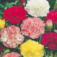Birth Flower Of January - flower of the month do you know your birth flower