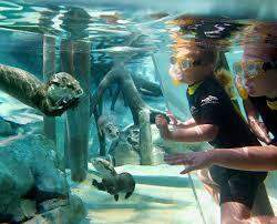 Map Of Seaworld Orlando by Orlando U0027s All Inclusive Day Resort Discovery Cove