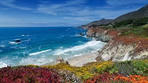 ocean and coastline san diego zoo animals u0026 plants