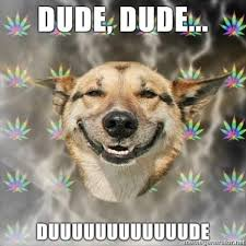 Stoned Dogs Meme - stoner dog know your meme