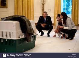 national thanksgiving turkey us president barack obama smiles as his daughters malia and sasha