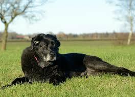 dog euthanasia euthanasia what to expect petmd