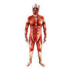 Vegeta Halloween Costume Muscle Suit Costumes Ebay