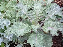 Fall Vegetable Garden Plants by Growing Fall Vegetables U2014 Veggie Gardening Tips