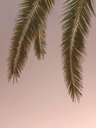 California Cool Scents Tropicana Free 1pc Palm Hang Outs Aroma Rand nautical design and organization photographs palm trees