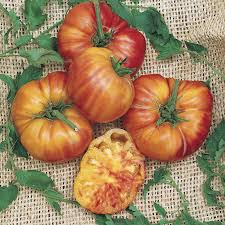 big rainbow tomato seeds from park seed
