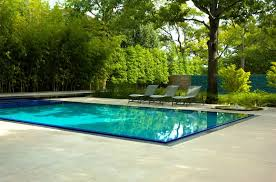 grey lounge chairs placed tree near blue swimming pool