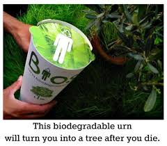 biodegradable urn biodegradable urn what tree do you want to be slim
