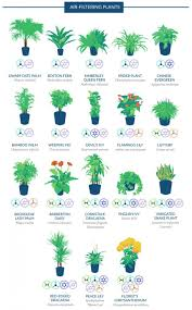why indoor plants are important for indoor air quality the