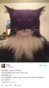 15 funny tweets about cats bored panda