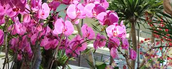 orchid pictures airport attractions singapore changi airport