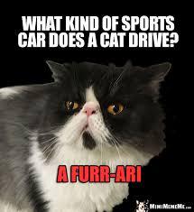 Ving Meme - cat car jokes auto kitty riddles funny driving cat memes mew ving