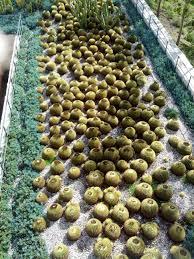 Herb Robert Pictures Getty Images Getty Center Rooftop Garden The Smarter Gardener