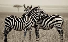 online get cheap african wildlife art aliexpress com alibaba group