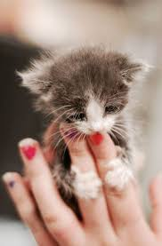 473 best fur therapy oh baby baby animals images on pinterest