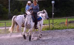 chambre d hote equitation haute provence authentique gîte rural sur ferme à la motte du