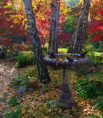reader photos pauline u0027s garden california fall color