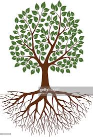green tree with roots vector getty images