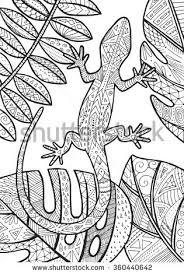 vector lizard tropical illustration coloring stock vector