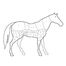 comment cuisiner un steak de cheval viande de cheval pour anémique allergique