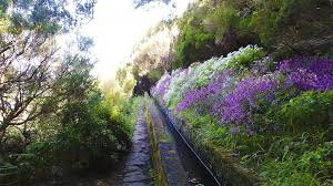 lavender jeep levada do rabaçal walk u0026 jeep tour