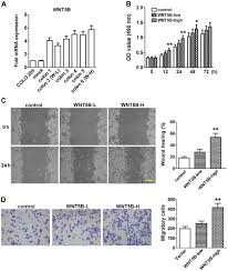 overexpression of wnt5b promotes colo 205 cell migration and