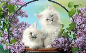 pretty wallpapers for desktop 30 cute and lovely cat wallpapers for desktop