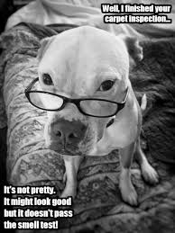 Meme Edit - dog picture resize meme edit servicemonster