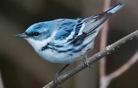 Minnesota birds images Birds audubon minnesota jpg