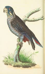 bird figures 470 best parrots images on pinterest parrots bird prints and flora