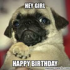 Birthday Pug Meme - nice birthday pug meme kayak wallpaper