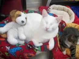 Blind Cat Sanctuary Blind Cat Rescue U0026 Sanctuary Inc Nonprofit In St Pauls Nc