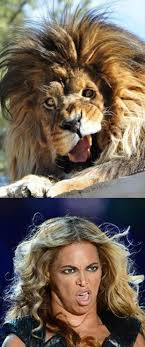 How To Make A Meme Face - 84 best lion memes images on pinterest ha ha funny stuff and