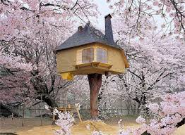 famous tree houses 50 amazing treehouses around the world modscape prefab home