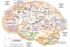 Sheep Brain Anatomy Game Best 25 Human Brain Mapping Ideas That You Will Like On Pinterest