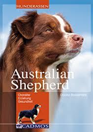 australian shepherd 1 jahr kaufen australian shepherd auswahl haltung erziehung beschäftigung