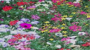 Flower Gardens Wallpapers - flower leaf flower garden green color summer orange wallpaper