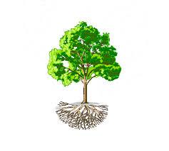 a tree shaped torus