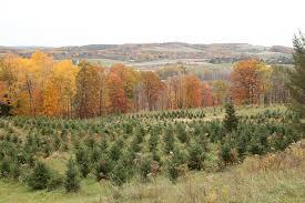 the hober tree farm
