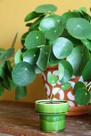 2612 best houseplants images on pinterest houseplants indoor
