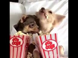 Meme Eating Popcorn - two friendly doggies eating popcorn cute video youtube