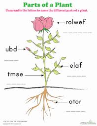 parts of a plant worksheet education com