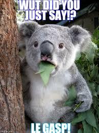 Gasp Meme - surprised koala meme imgflip