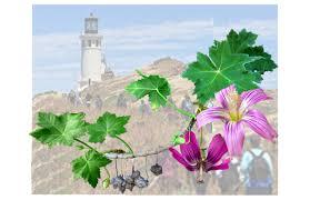 edible california native plants california native plants bagsc news