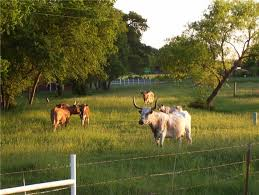 Texas scenery images Scenery spring pictures scenery pictures of texas jpg