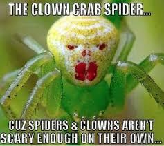 Spider Bro Meme - evil spider meme spider best of the funny meme