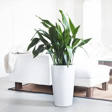home interior plants indoor plants nyc office and house plant delivery service in
