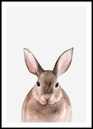 rabbit poster rabbit poster