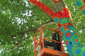 yarn bombing comes to stony brook s trees tbr news media