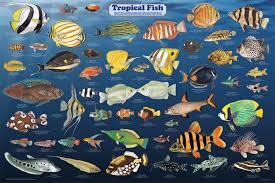 freshwater aquarium fish list aquascape ideas